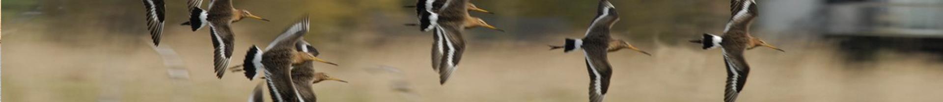 slide weidevogels